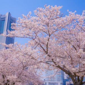 横浜市都筑区 不要品回収